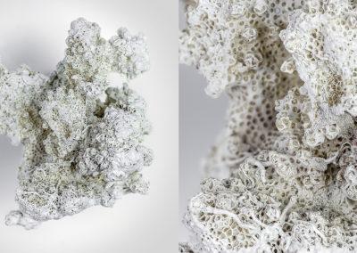 Acropora Branching Coral